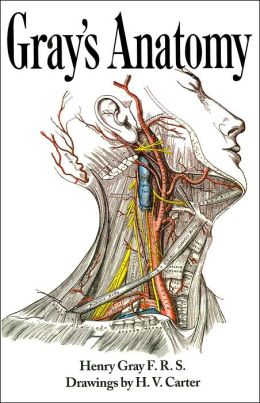 Gray S Anatomy Descriptive And Surgical By Henry Gray